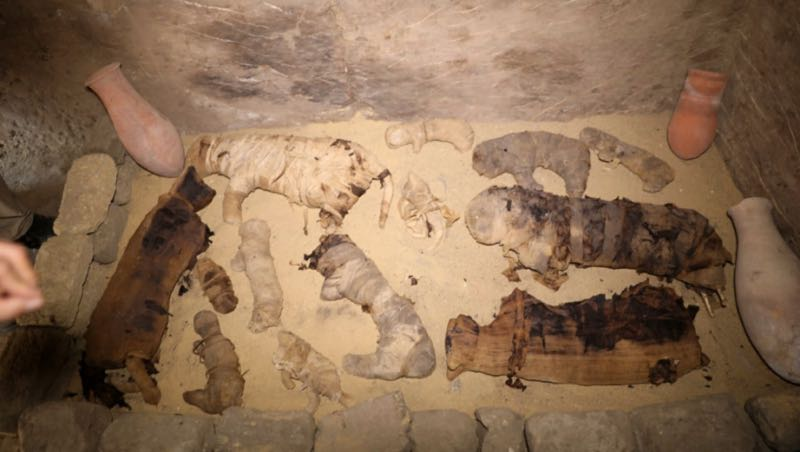 gatti mumificati